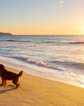 dog-on-the-beach